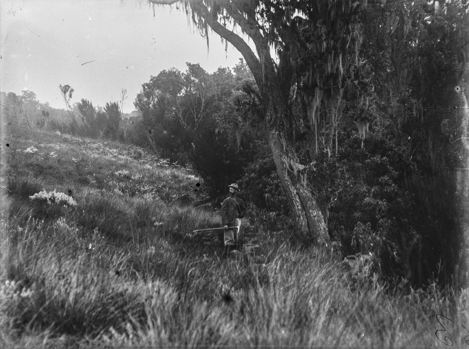 277. Верхняя граница распространения леса в районе Килиманджаро