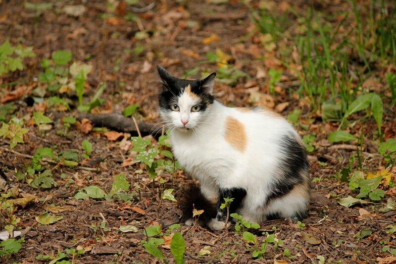 Кошачья полянка 0_463a7_d1230387_XL