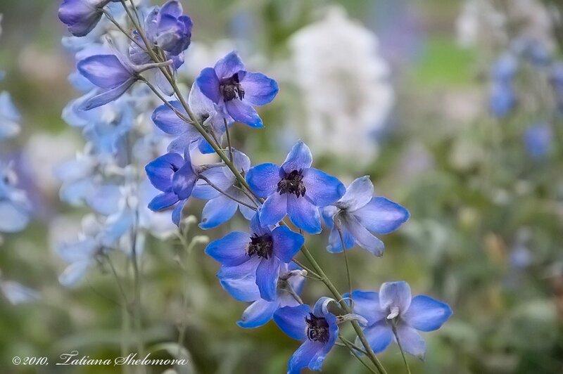 Сентябрьские цветы. Приморский парк.