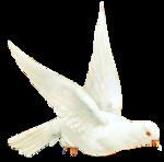 White Dove_6-04~pjs.png