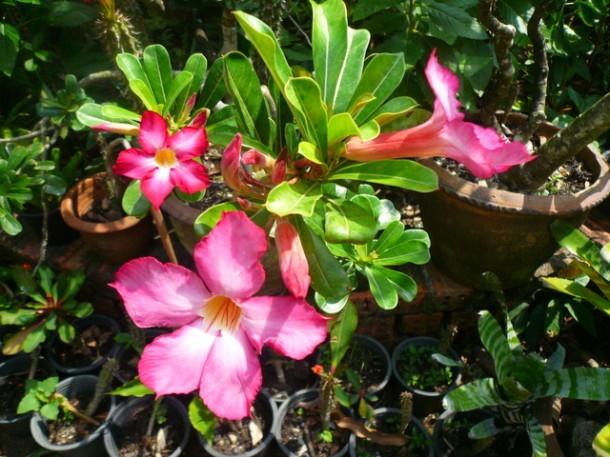Цветы Таиланда 0 141ae0 a1469096 orig