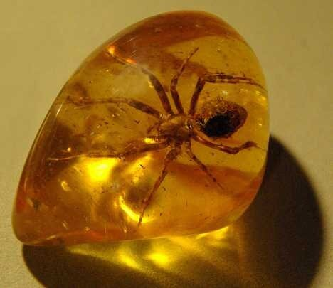 паук, янтарь