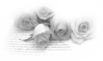 ~Misted_Roses_On_A_Page_Greyscale_RM.png