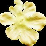 kimla_WTSE_flower2.png