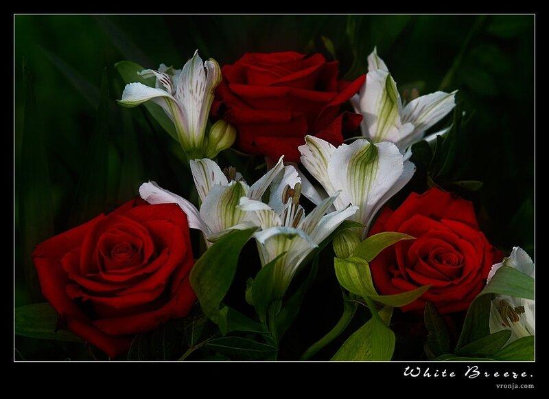 Картинки для прекрасной леди розы, местом для надписи
