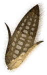 Клипарт в  PNG