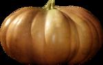 ial_sh_sf_pumpkin1.png