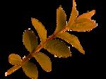 Осенний клипарт в пнг