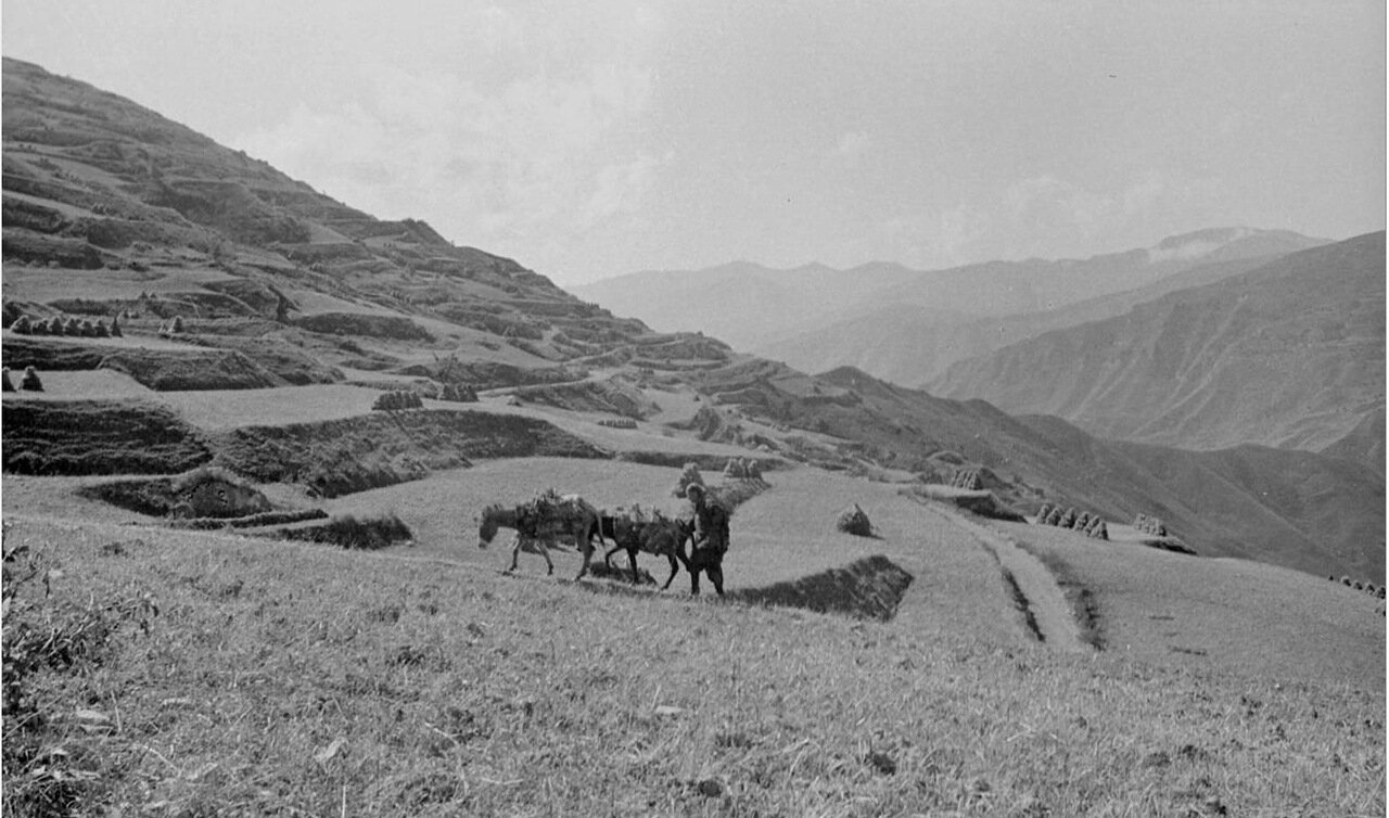 Крестьянское поле на склоне холма