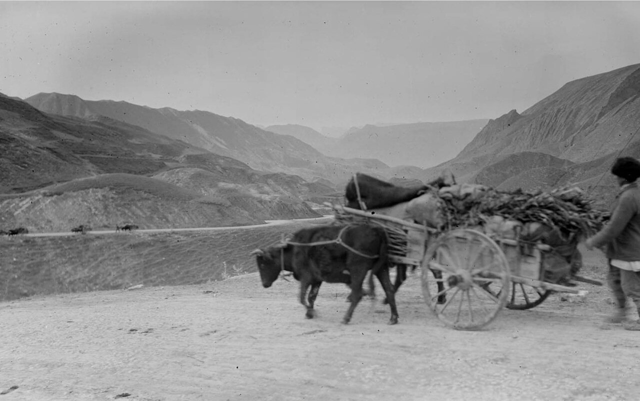 Дагестанский крестьянин с грузом валежника