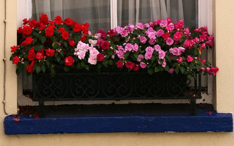 Садовый дизайн - контейнерное садоводство. обсуждение на liv.