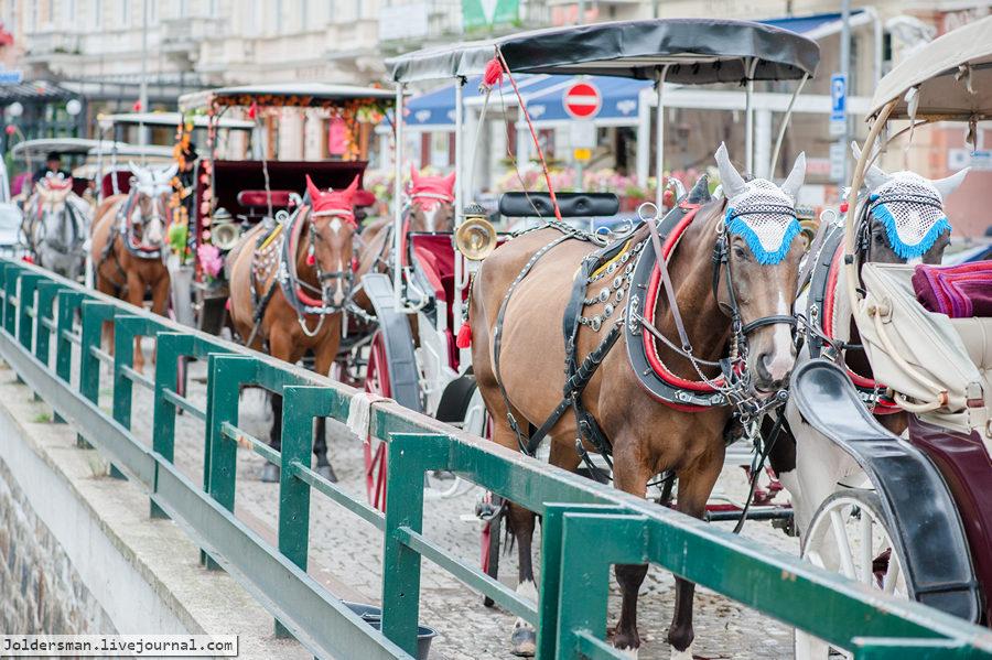прогулка на лошадях в Чехии
