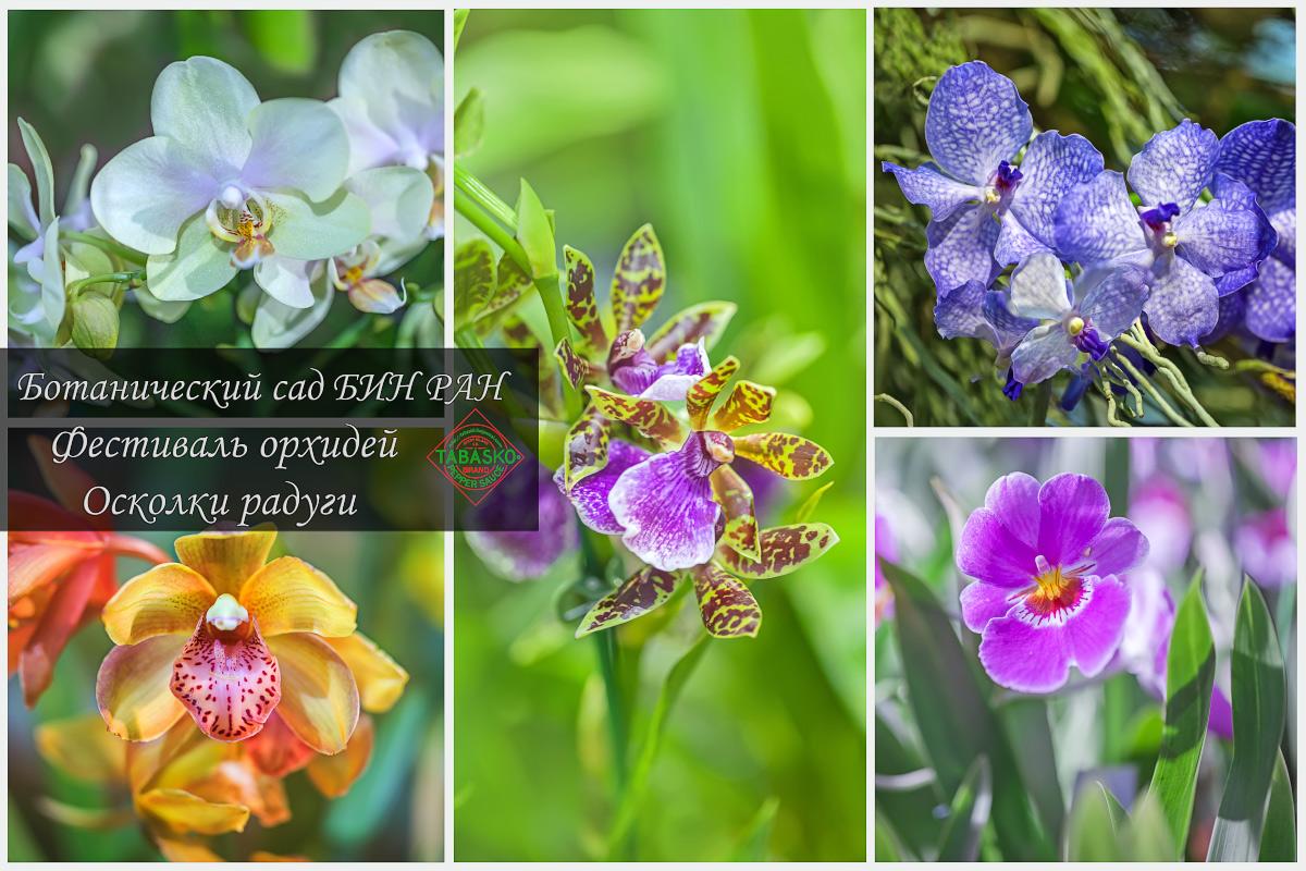 Фестиваль орхидей и бромелиевых