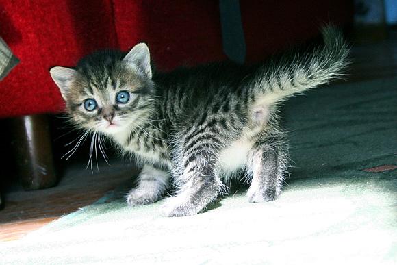 как различить кота от кошки у котенка