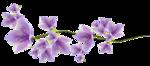 «Magic of Flowers» 0_7c4ad_dff6a713_S