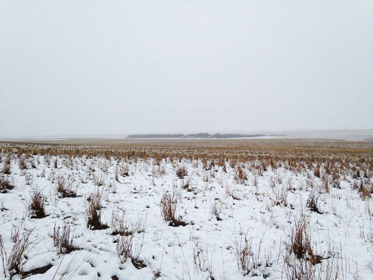 На этой фотографии 550 овец, можете их найти? (5 фото)