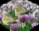LilacLovelies.png