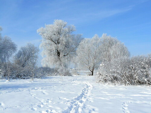 Маленький рассказ на тему зимний лес