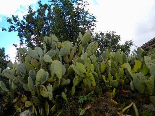 Заросли кактусов и автографами туристов