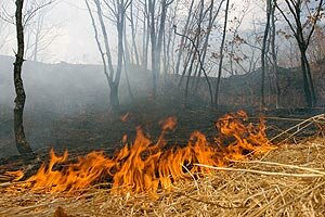 За сутки восемь из 29 лесных пожаров ликвидированы в Приморье