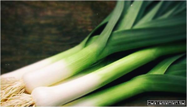 3 рецепта блюд из лука-порея. Вкусно и полезно!