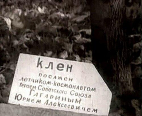 Клён Гагарина 1972.JPG