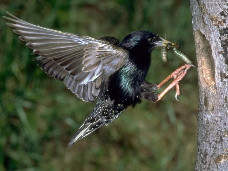 3. Влияние прозака на птиц Принимая антидепрессант прозак, важно помнить, что тем самым вы оказывает