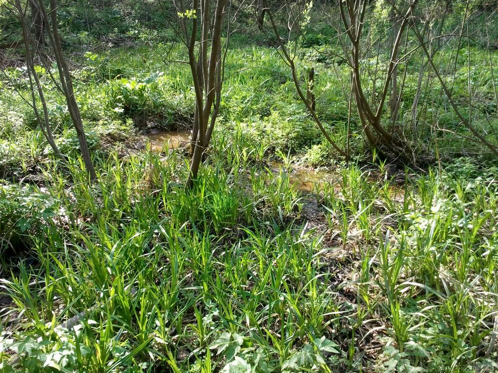 Кабаны в Битцевском лесу