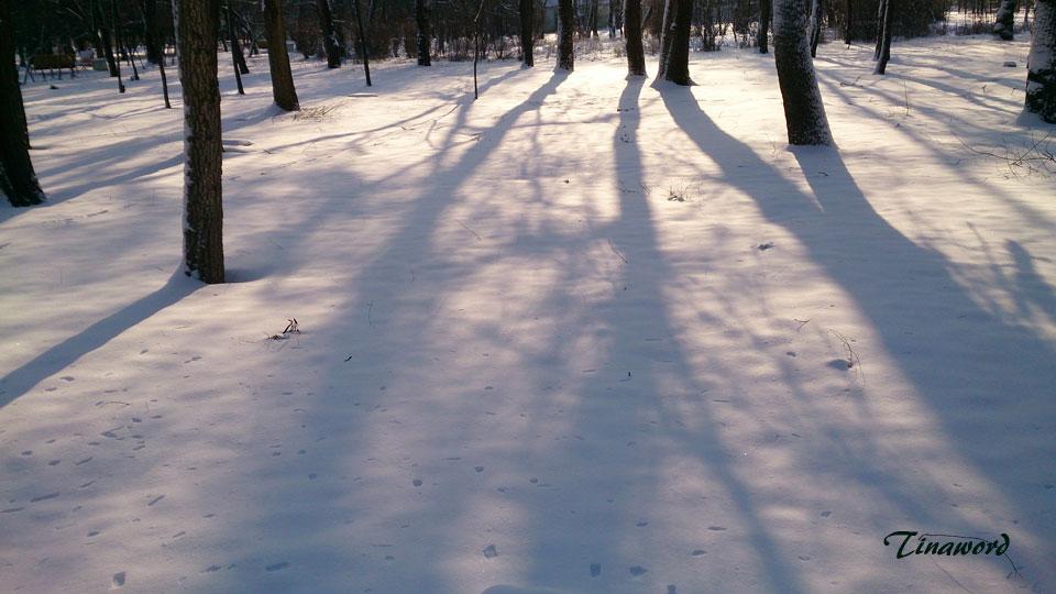 тени-на-снегу-0.jpg
