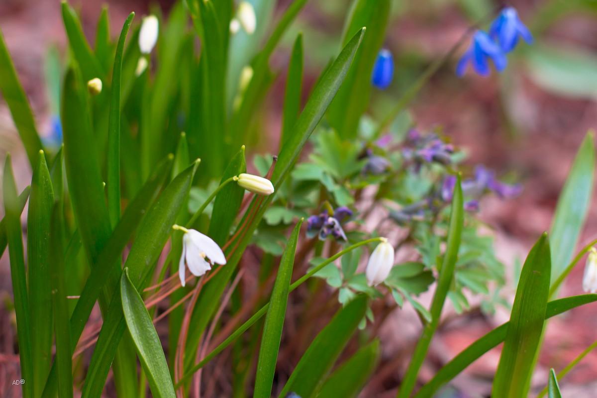 Весенний фестиваль цветов в «Аптекарском огороде»