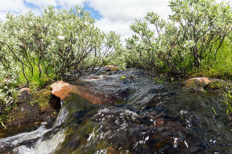 ручей в тундре в Норвегии