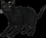 rs_blackcat6.png