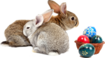 rabbit_15.png