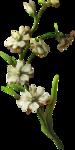 ldavi-paintersfaeries-flower14.png