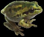 Secret Garden Frog.png
