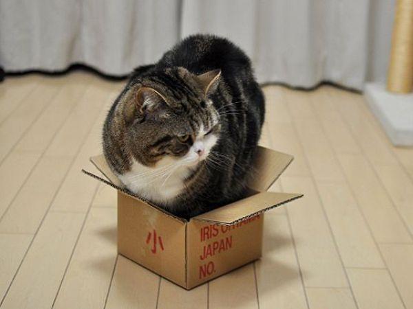 Забавные животные...:) http://img-fotki.yandex.ru/get/4612/130422193.31/0_684d1_4e32dd61_orig