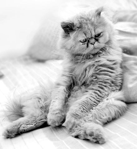 Забавные животные...:) http://img-fotki.yandex.ru/get/4612/130422193.31/0_684d9_d290caa4_orig