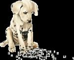 Собачки (57).jpg