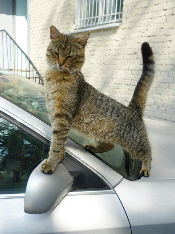 ...Ещё я служу на почте, а в свободное время люблю погонять на автомобиле.
