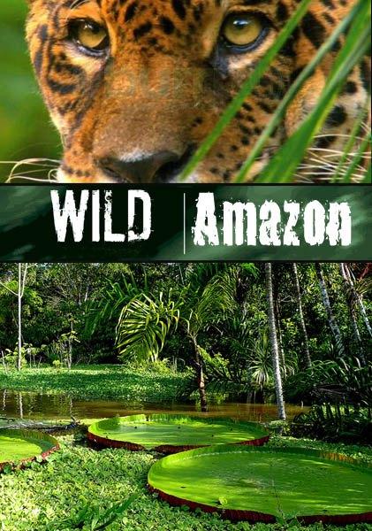 Дикая природа Амазонки / Wild Amazon (2010/SATRip)