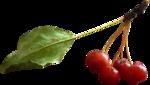 осенние тропинки (74)