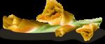 осенние тропинки (50)