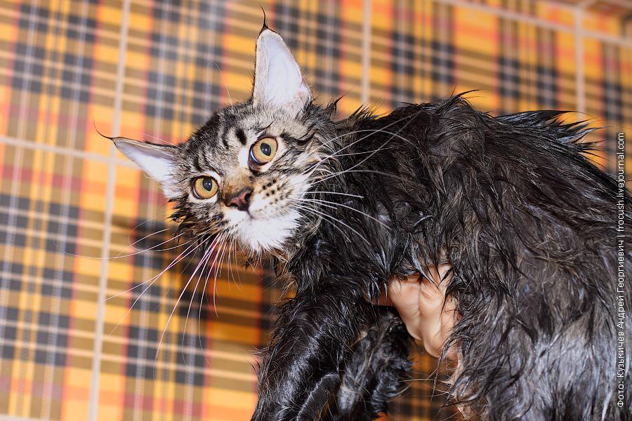 мытье котят