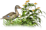 68277379_Flowers_and_the_bird1.png