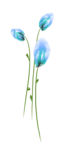 CF-OUAT_sussieM_ Enchanted-Forest_Element16.png