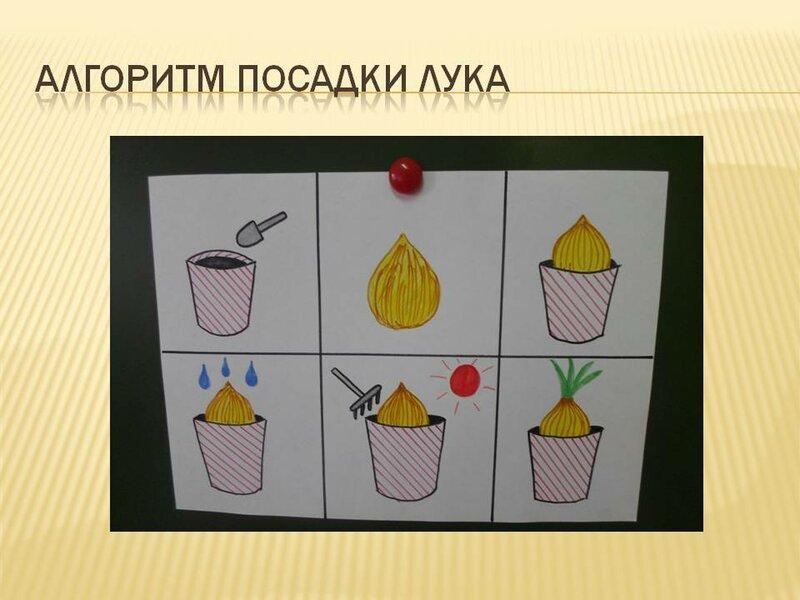 презентация со-бытия Как вырастить витаминку на подоконнике.jpg