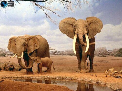 Картинки природа животных