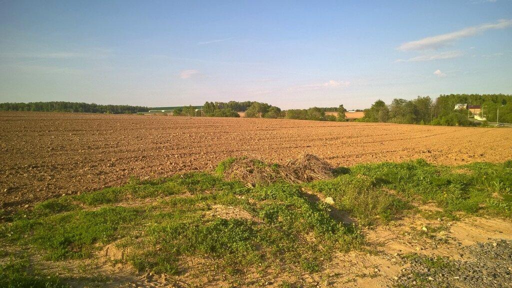 Поле около деревни Пёсье