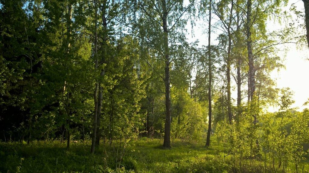 Берег Лубянки