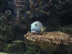 США: Национальный аквариум в Вашингтоне